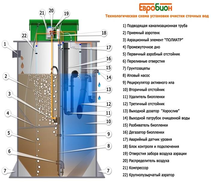 Схема Евробион